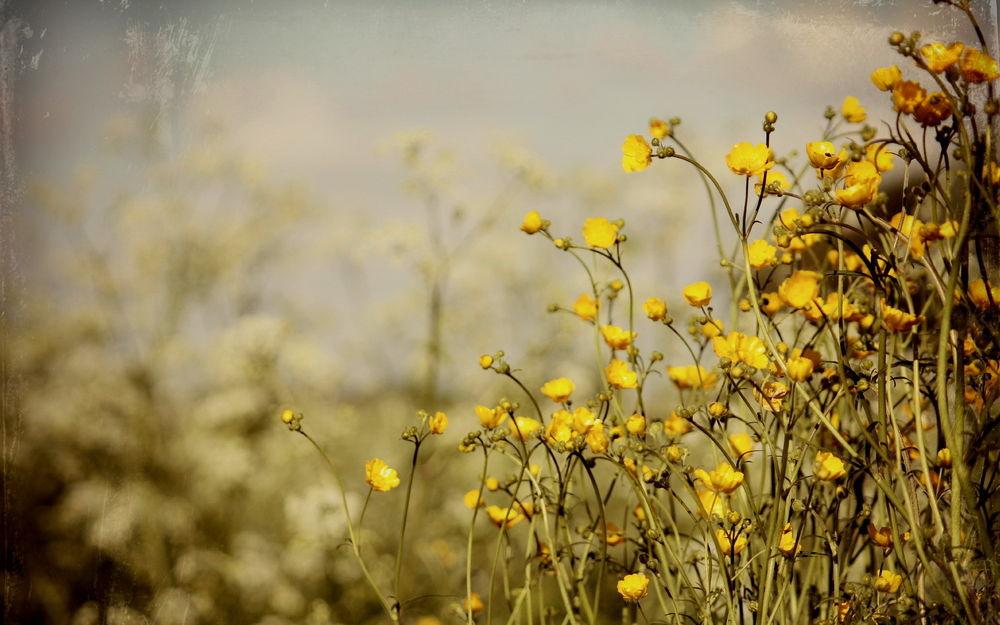 Полевые цветы на рассвете 5