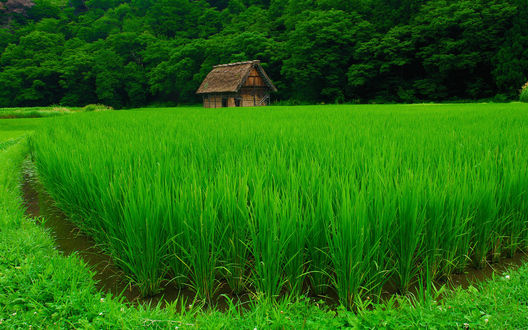 Обои Деревянный домик в поле