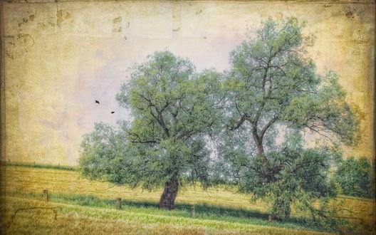 Обои Два одиноких дерева в поле