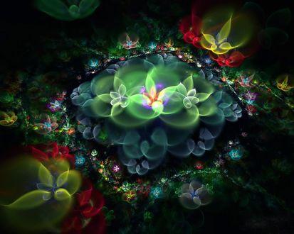 Обои Фрактальные цветы на чёрном фоне