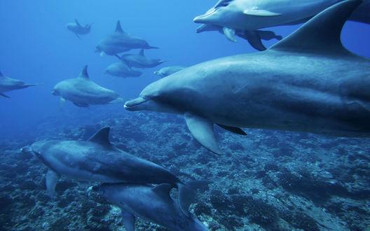 Обои Стая дельфинов
