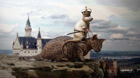 Обои Мышки королевства взяли верх над кошками, белая мышь в королевской короне оседлала кота (today, we hunt dragons)