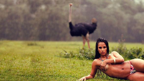 Обои Горячая голая латинская девушка лежит на траве под проливным дождем, на фоне недоумевающего страуса