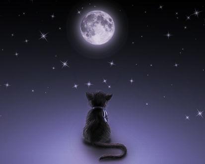 Обои Чёрный котёнок, глядящий на луну и звёздное небо