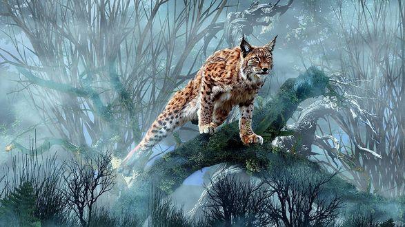 Обои Грациозная рысь на охоте в глухом туманном лесу