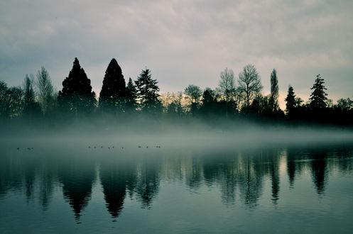 Обои Утки сидят на водной глади озера ранним пасмурным утром