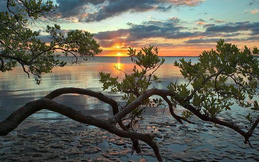 Обои Ветка дерева на фоне озера и заката