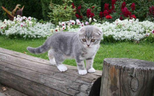 Обои Милый котёнок с поджатыми ушками стоит на бревне в саду