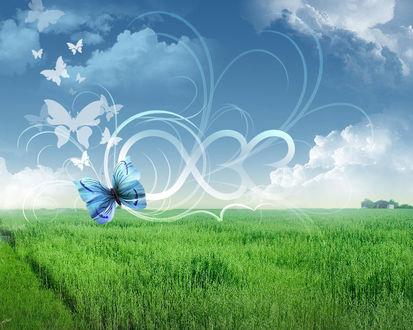 Обои Над лугом с травой рисованные бабочки на фоне неба