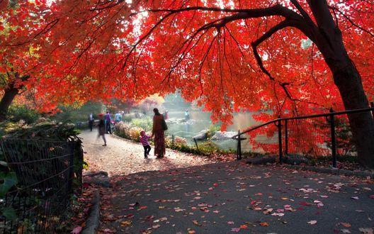 Обои Central park New york city / Центральный парк города Нью Йорк, Огромное дерево с красными листьями, растущее на берегу пруда, и гуляющие по дорожке люди