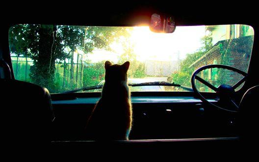 Обои Кот сидящий в машине смотрит в окно