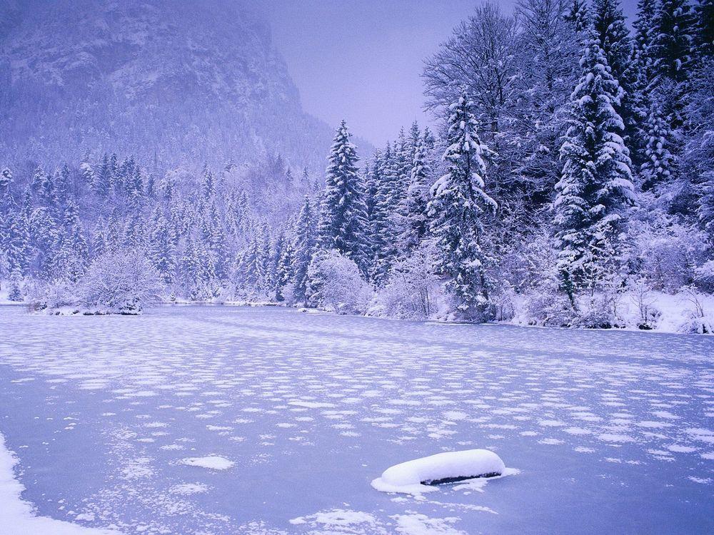Обои для рабочего стола Всё замёрзло на реке в лесу, воды совсем не видно
