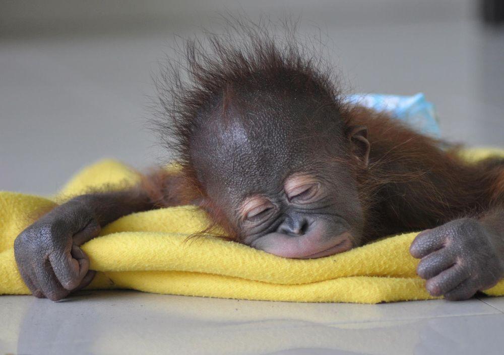 Прикольные картинки со сном