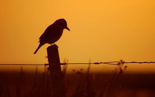 Обои Силуэт птички, которая сидит на деревянном колышке на закате