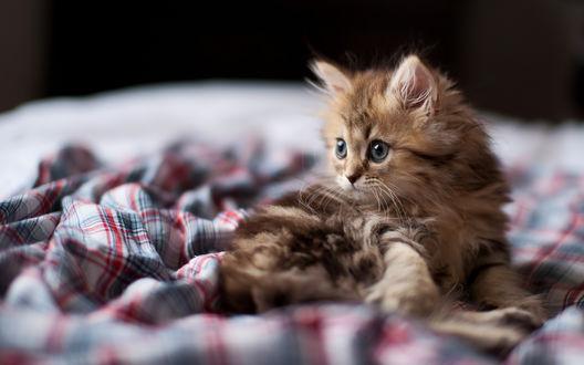 Обои Маленький котенок на покрывальце