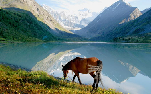 Обои Конь пасется на лугу у озера, чуть дальше видны горы
