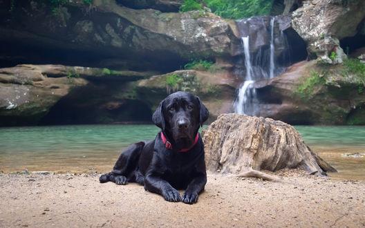 Обои Черный Лабрадор лежит на берегу, недалеко от водопада