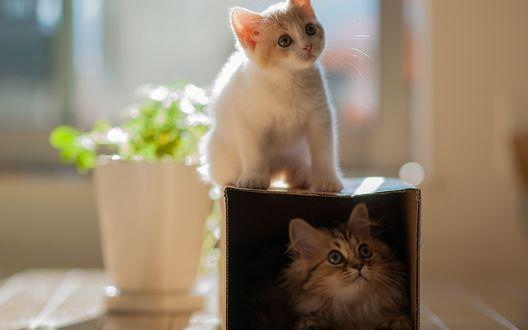 Обои Кошечка Hannah / Ханна сидит на коробке, в которой сидит кошечка Daisy / Дейзи, фотограф Ben Torode