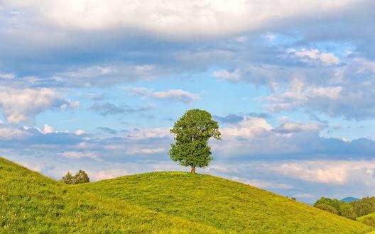 Обои Одинокое дерево на зеленом холме