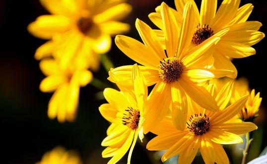 Обои Красивые желтые цветы