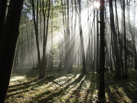 Обои Летний лес в лучах восходящего солнца