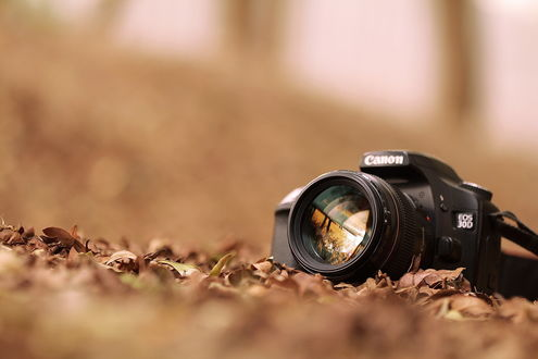 Обои Фотоаппарат Canon лежит в осенних листьях