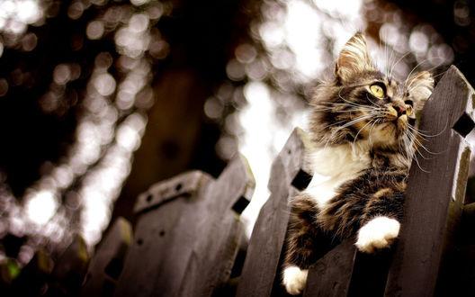 Обои Кот сидит на заборе