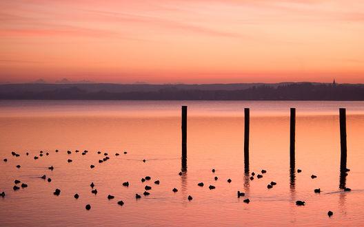 Обои Небо и морская гладь практически одного розового цвета и пристань, у которой плавает множество птиц, ранним утром