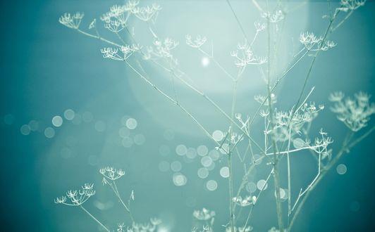 Обои Красивое растение бирюзового цвета