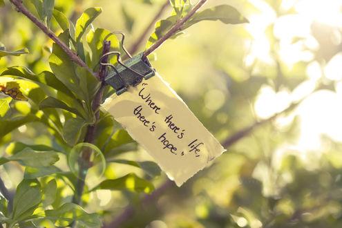 Обои На ветках висит листок прицепленный прищепкой  'Where There's life, there's hope / Там, где жизнь, есть надежда'