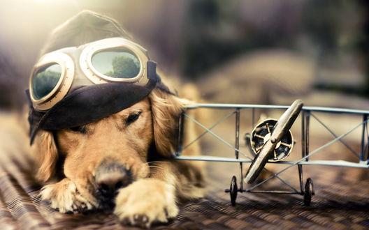 Обои Пёсик в шапке пилота лежит рядом с игрушечной моделью самолета