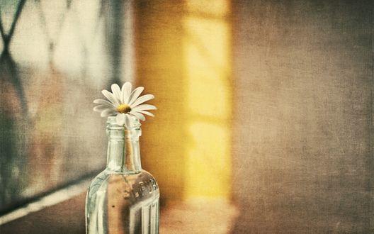 Обои Прозрачная стеклянная бутылка с ромашкой стоит на подоконнике