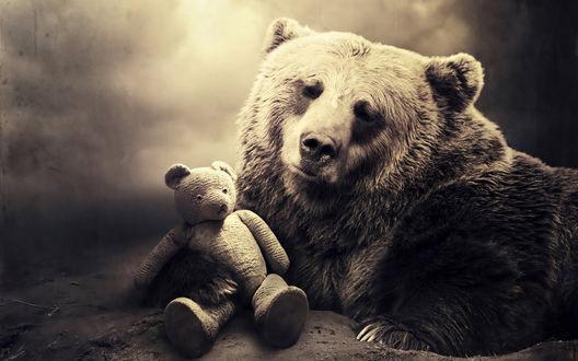 Обои Медведь с плюшевым мишкой