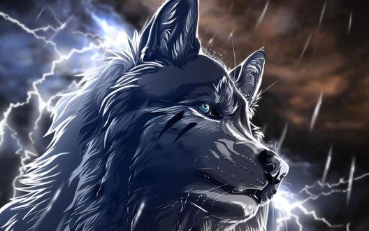 Обои Рисунок волка на фоне грозового неба