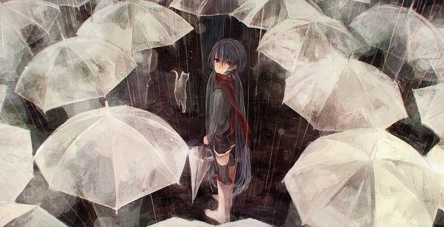 Обои Vocaloid Hatsune Miku / Вокалоид Хатсуне Мику с закрытым зонтиком и кошка под дождём среди раскрытых зонтов