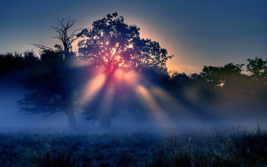 Обои Солнечные лучи пробиваются сквозь крону дерева в утреннем тумане