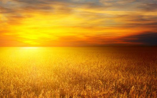 Обои Пшеничное поле, над которым огненное небо
