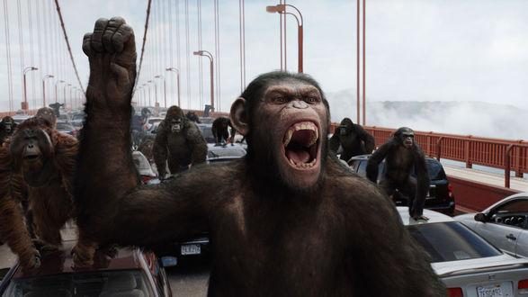 Обои Разъяренные обезьяны на мосту среди машин, фильм 'Восстание планеты обезьян' / 'Rise of the Planet of the Apes'