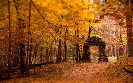 Обои Осенний лес и старая стена дверного проёма на дороге