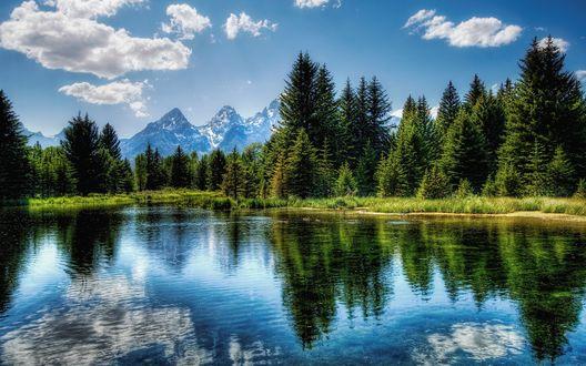 Обои Озеро в лесу