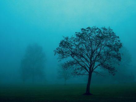 Обои Дерево в тумане