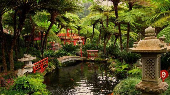 Обои Португалия, Madeira, Ботанический сад .Небольшой прозрачный пруд с плавающими золотыми рыбками, окруженный зелеными пальмами с небольшим мостиком, беседками