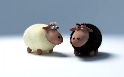 Обои Черная и белая овечки