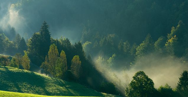 Обои Утренний туман окутывает зеленые верхушки деревьев