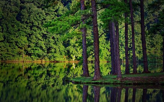 Обои Река, на берегах которой располагается дремучий зеленый лес