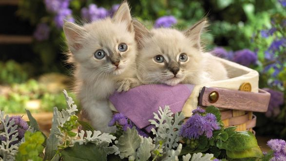 Обои Два пушистых котёнка в корзинке среди цветов