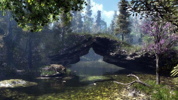 Обои Небольшая речка в лесу, на берегу которой притаился леопард