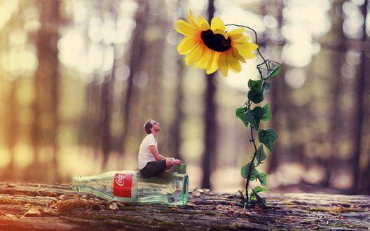 Обои Парень сидит на стеклянной бутылке кока-колы и смотри на подсолнух, вокруг лес
