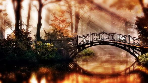 Обои Маленький лесной мостик над речкой