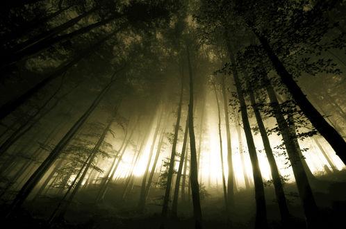 Обои Туманный ночной лес